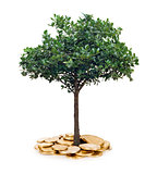 tree and coins , currency, investment and business concepts