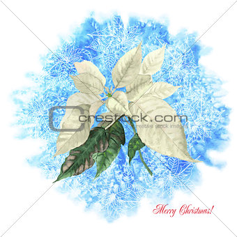 Background  with Christmas poinsettia