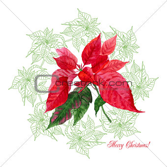 Background  with bouquet of  Christmas poinsettia