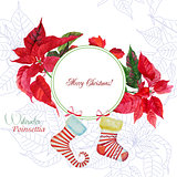 Background  with bouquet of poinsettia and sock
