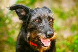 Black Dog On Green Grass Background