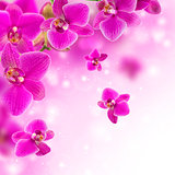 Floral background with pink orchid.