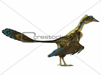 Archaeopteryx Side Profile
