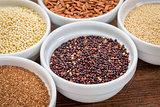 quinoa gluten free grain
