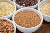 teff gluten free grain