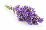 Lavender bundle isolated.
