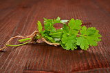 Coriander bunch. Culinary herbs