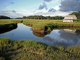 salt marsh at Essex