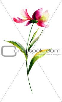 Cosmea flower