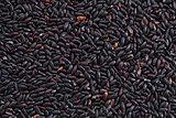 forbidden rice grain