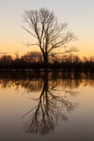 Tree Lake Reflection Sunset or Sunrise