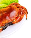 Tasty boiled crab