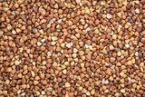 buckwheat kasha bacground