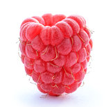 Ripe Red Juicy Raspberry Isolated on White Background