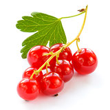 Ripe Red Currants with Green Leaf Isolated on White Background
