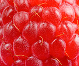 Background of Ripe Red Juicy Raspberry