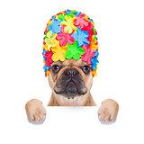 swimming cap dog
