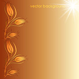 floral vector background two