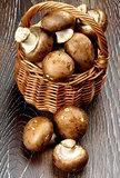 Portabello Mushroom