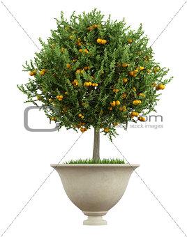 Classic vase with small orange tree  - 3D Rendering