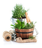 Fresh green herbs with garden tools