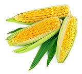 Fresh corn with green leaf