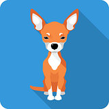 dog Chihuahua icon flat design