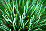 Fresh spring green grass close up macro