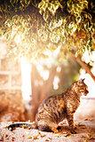 Beautiful tabby cat sitting under the tree