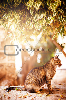 Beautiful tabby cat sitting under the tree