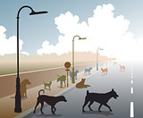 Dog road