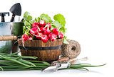 Fresh radish and green onion with garden tools
