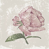 Vintage Grunge Rose Background