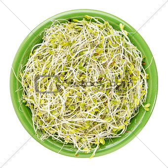 broccoli and radish sprouts