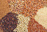 gluten free grains  abstract