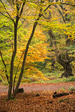 Beautiful vibrant Autumn Fall colors in forest landscape