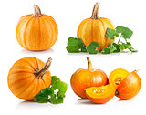 Set ripe pumpkin with green leaf