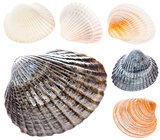 Sea Cockleshell Isolated On White Background Set Collage Collect
