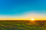 Sunset, Sunrise, Sun Over Rural Countryside Wheat Field. Spring