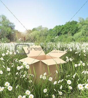 cardboard box on the grass field