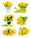 Set bunch yellow tulips