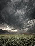 stormy field view