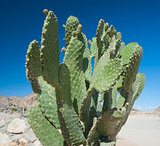 Cactus growing in remote desert