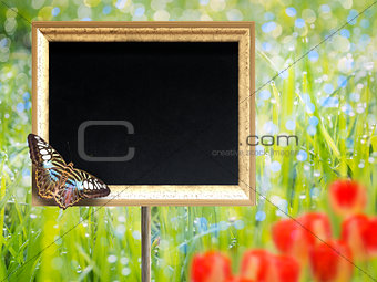 Chalkboard with butterfly