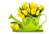Bunch yellow tulips in watering can
