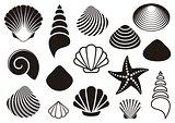 Sea shells and starfish
