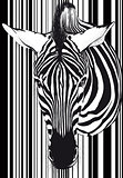 Zebra barcode Face and neck
