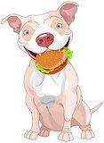 Pit Bull Dog Eats Hamburger