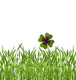 shamrock leaf in grass