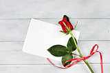 Red Rose with Blank Card